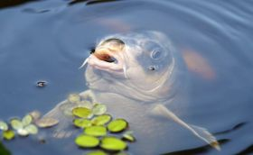 Two points of view on carp fishing, 3rd issue